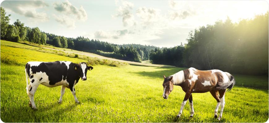 Naturalne colostrum krowie, mleko klaczy, probiotyki narine, zakwaski do jogurtów.