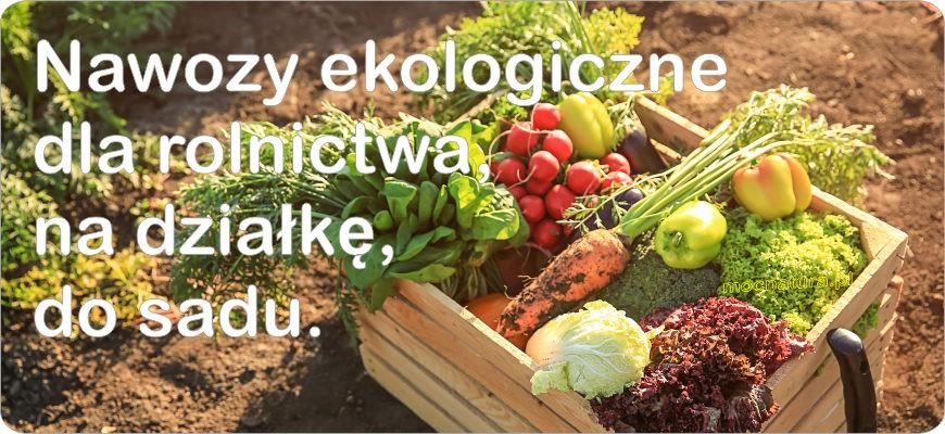 Dostarczając odpowiednich nawozów ekologicznych zapewniamy Sobie zdrowe plony.